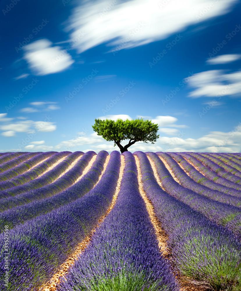 Fototapety, obrazy: Lawendowe pole w Prowansji, Francja