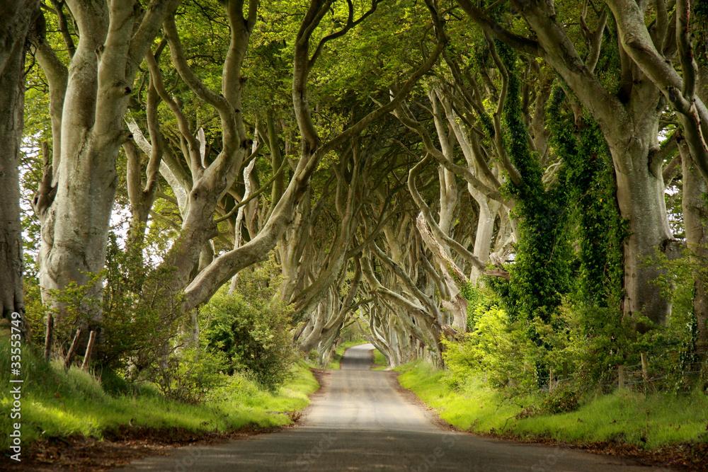 Fototapety, obrazy: Niesamowita aleja drzew