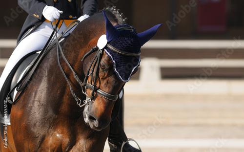 Foto op Canvas Paarden Dressage: portrait of bay horse
