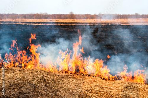 Valokuva  Fire on the nature