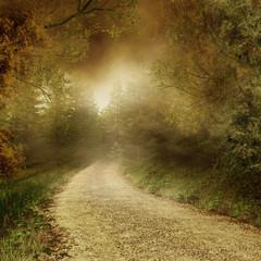 FototapetaJesienny las z wiejską drogą