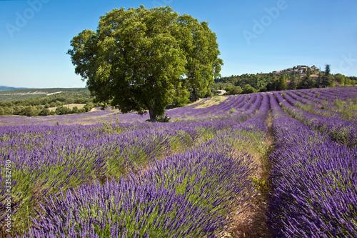 Tuinposter Lavendel Champ de lavande (à Vachères dans le 04)