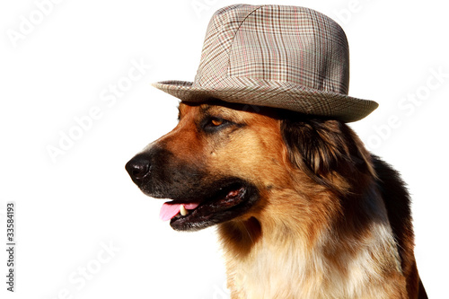 Hund Mit Hut Buy This Stock Photo And Explore Similar Images At