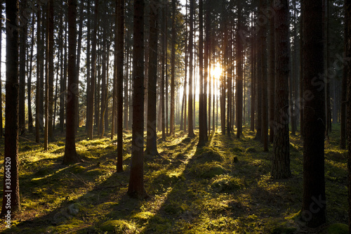 The forest in the mornig