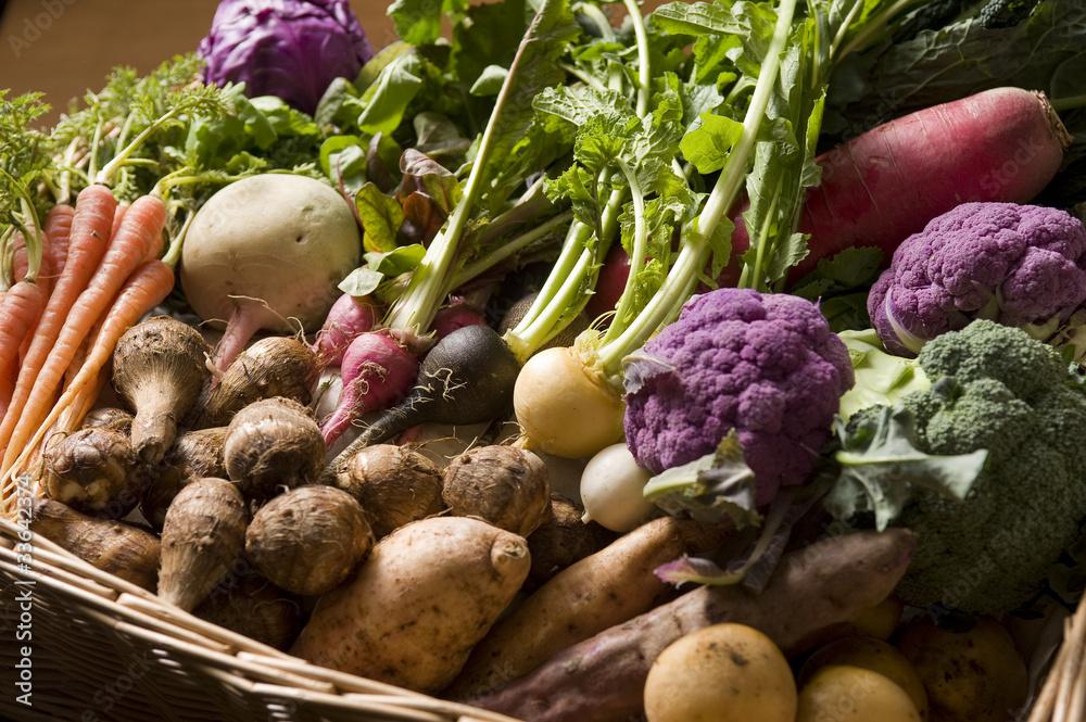 Fototapety, obrazy: 野菜 京野菜等