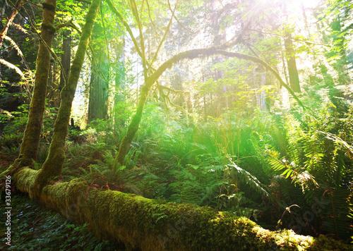 Naklejki dżungla  dzungla-w-sloncu
