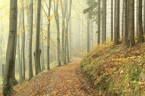 Papiers peints Foret brouillard Forest trail on the border between pine and beech trees
