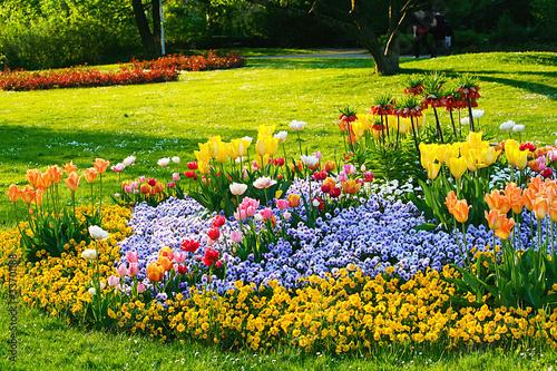 Blumenbeet Fototapeta