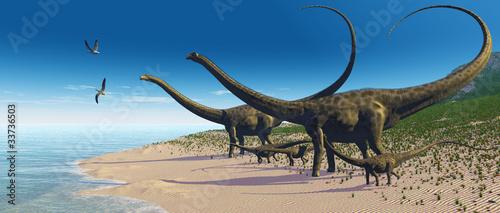 Fototapeta Diplodocus Herd