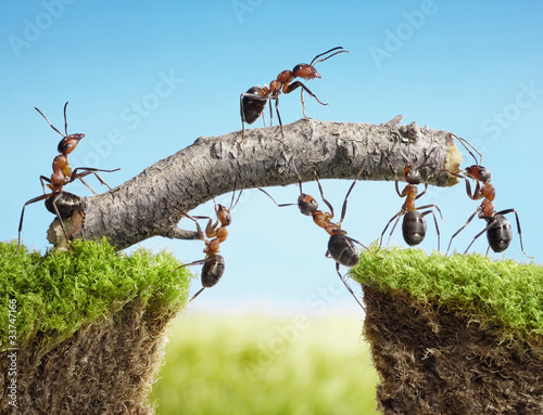 Papiers peints Ponts teamwork, team of ants costructing bridge