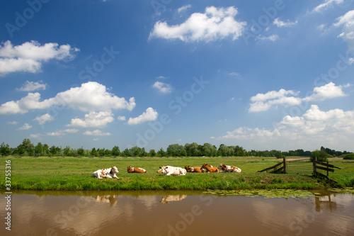Fotografie, Tablou Dutch landscape
