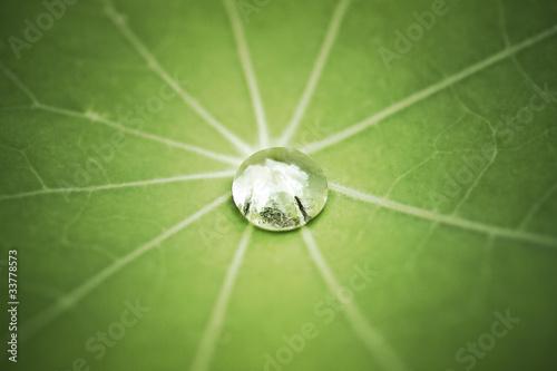 Foto op Canvas Lotusbloem Lotuseffekt blatt mit wassertropfen