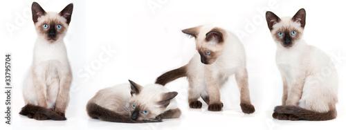 Obraz na plátně four young siamese cats
