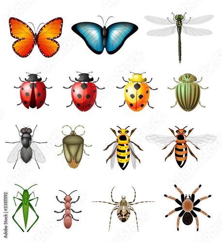 zaktualizowana-wersja-owadow-wektorowych-robaki-i-bezkregowce