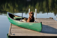 Let's Paddle