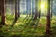 Leinwandbild Motiv Forest Sunset