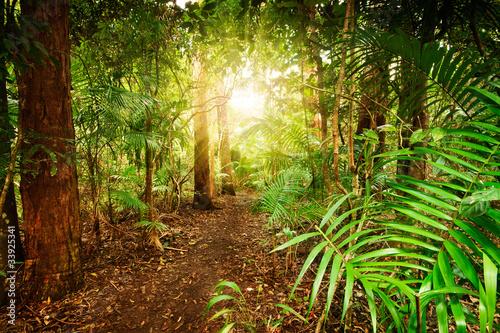 Tuinposter Weg in bos in australian rainforest