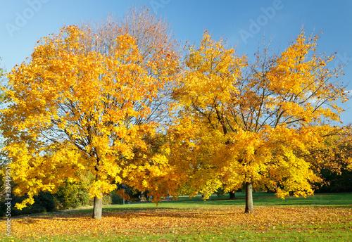 Poster Jaune Colorful autumn