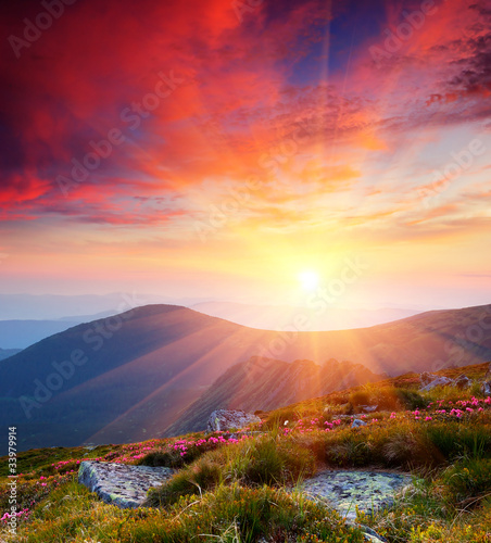 Spoed Foto op Canvas Bordeaux Summer landscape in mountains with the sun