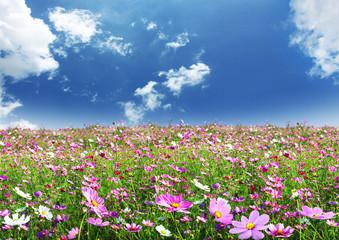 Obraz Beautiful flowers