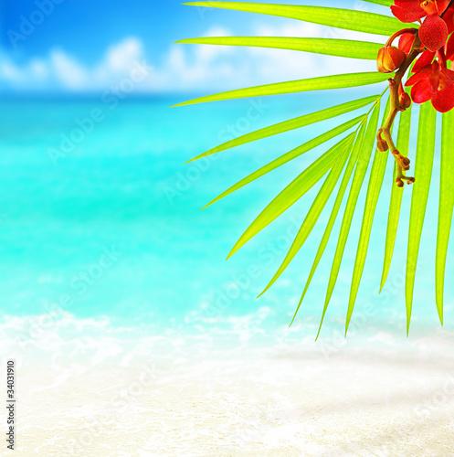 Spoed Foto op Canvas Turkoois Tropical beach