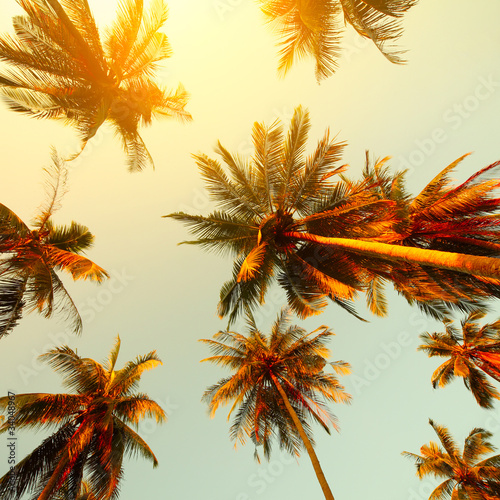 Fotobehang Aan het plafond Trees