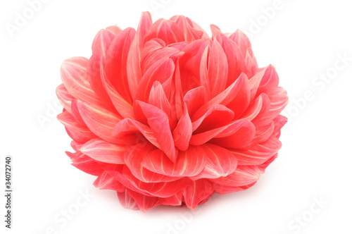 Foto op Plexiglas Dahlia Beautiful Red Dahlia Isolated on White Background