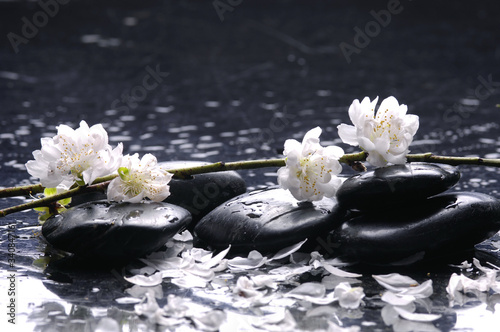Foto op Canvas Zen therapy stones with white cherry blossom on pebble