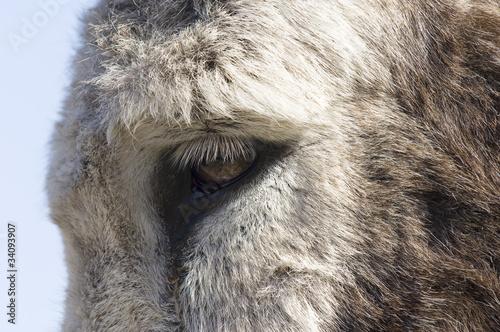Canvas Prints Elephant Cheval