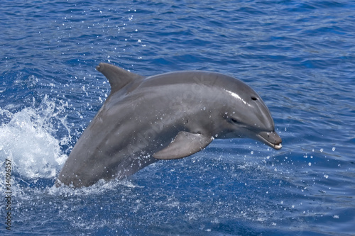 Papiers peints Dauphin Jumping dolphin