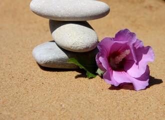 Fototapeta na wymiar galets et fleur d'althéa