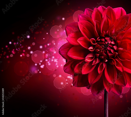 Dahlia Autumn flower design - 34253389