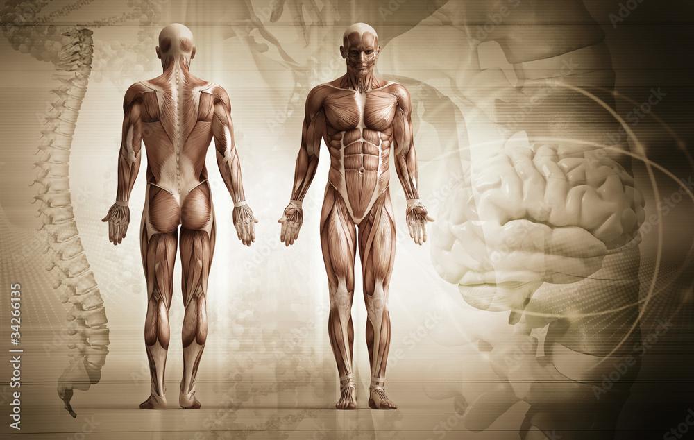 Fototapeta human body
