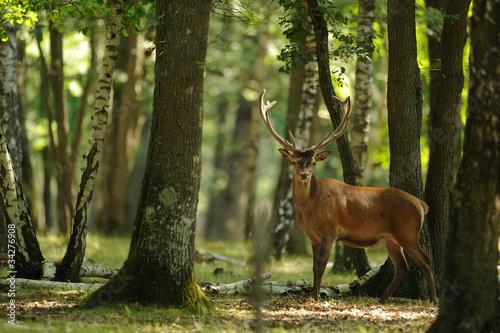 Photo Stands Deer cerf 4