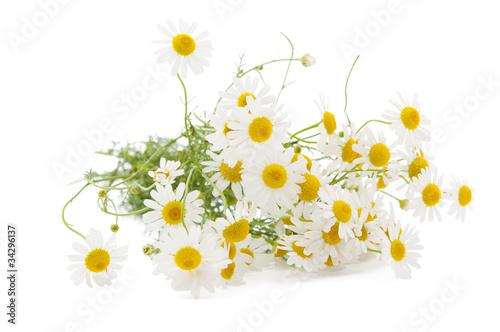 Foto op Canvas Madeliefjes Medical chamomile
