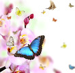Butterflies on blossoms of orchid, isolated on white background
