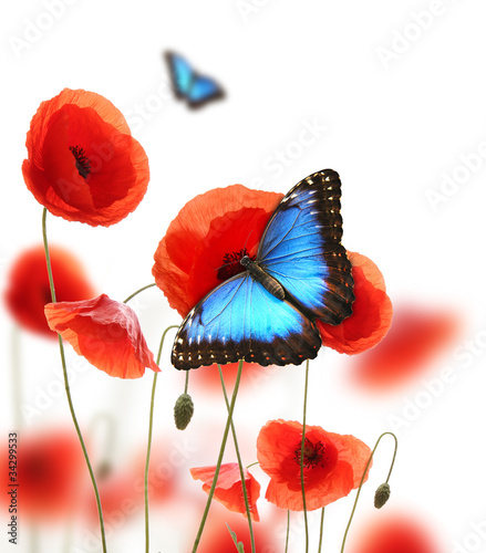 Fotobehang Poppy Exotic butterfly on poppy blossom, isolated on white background