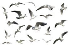 Set Of White Flying Birds Isol...