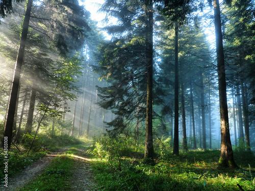 lesna-droga-w-tajdze