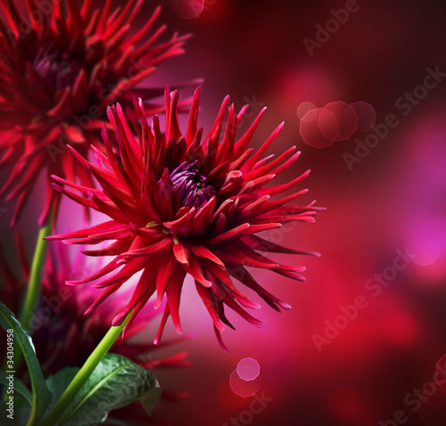 Dahlia Autumn flower design - 34304958