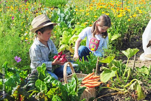 Kinder ernten im Garten