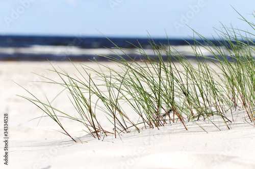 Grass on beach, #34334528