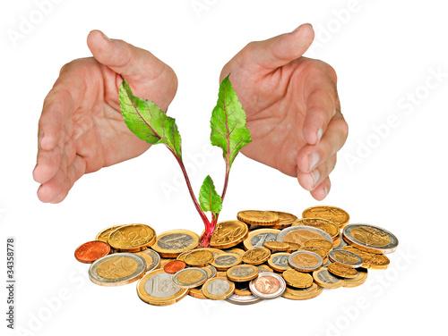 Staande foto Kameleon Beetrot growing from coins