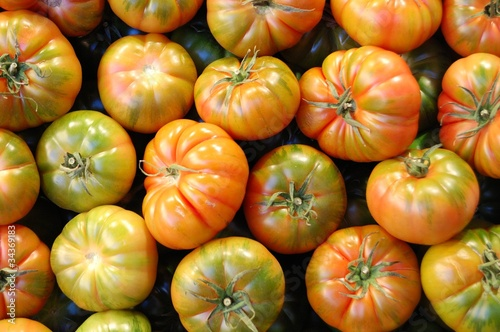 tomates Wallpaper Mural