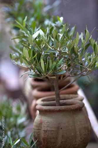 Papiers peints Oliviers Olivier, olive, plante, sud, méditerranée, arbre, jardin, parc