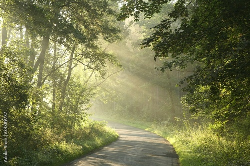 Papiers peints Foret brouillard Country road running through the spring deciduous forest at dawn