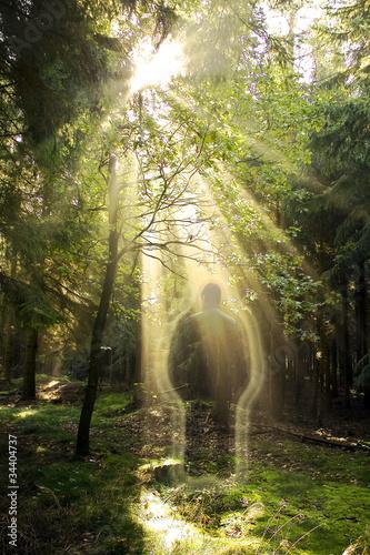 Obraz na płótnie Erscheinung im Wald