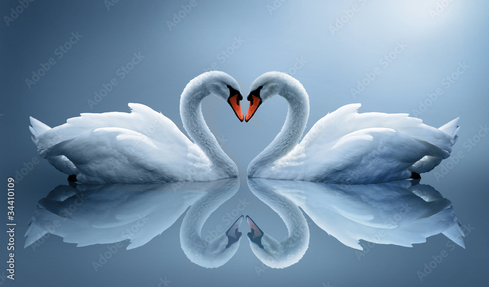 Fototapety, obrazy: swans