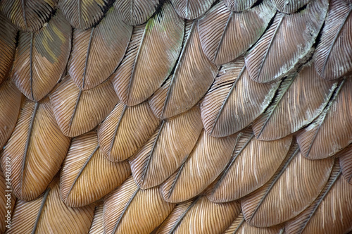 Foto op Canvas Texturen Eagle Feathers