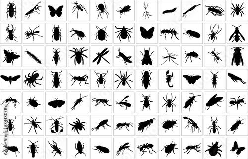 Fotografie, Obraz  collection of bugs - vector